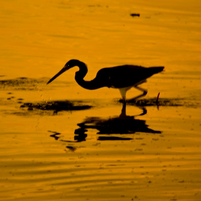 Herons are one of several bird species spotted at the refuge.