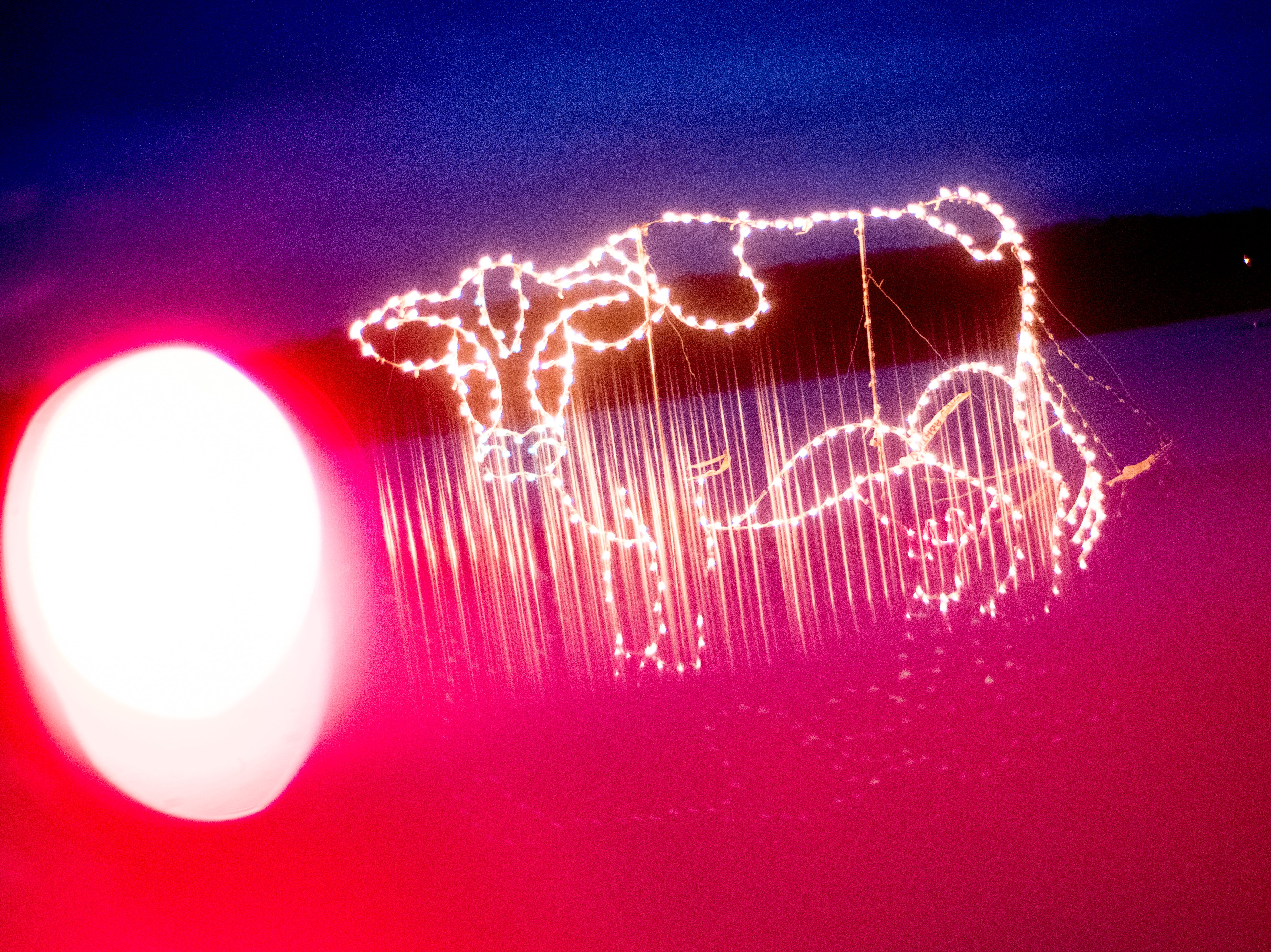 A cow light display at Knox CountyÕs 20th annual Holiday Festival of Lights kick off at The Cove at Concord Park in Farragut, Tennessee on Friday, December 21, 2018. The family-friendly event is free and will run through Dec. 29 from 6 to 9 p.m., excluding Christmas Eve and Christmas Day.