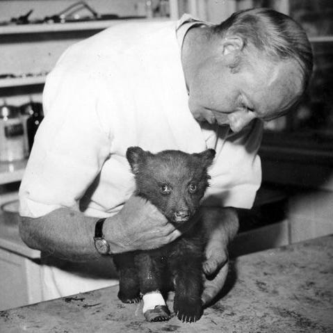 1948's Capitan fire, Chapman and the rescue of Smokey Bear