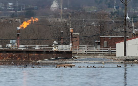 Northern shoveler ducks during the Delmarva Ornithological Society's  annual Christmas Bird Count at the City of Wilmington's wastewater treatment facility.