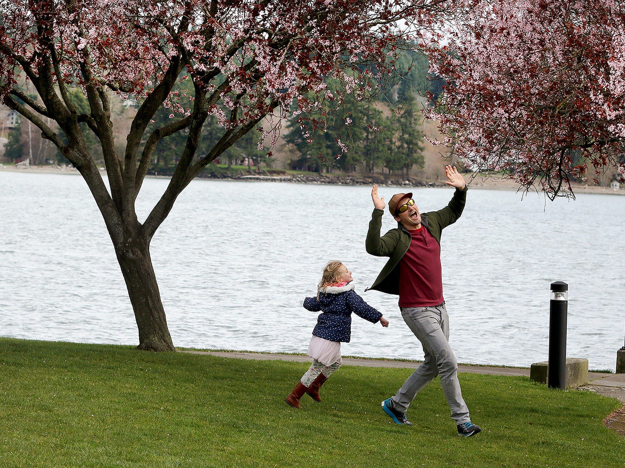 Kip Dambacher of Seabeck reacts after getting caught by his daughter Hadley, 4, in a game of tag under the spring blossoms at Silverdale Waterfront Park on Tuesday March 27, 2018.