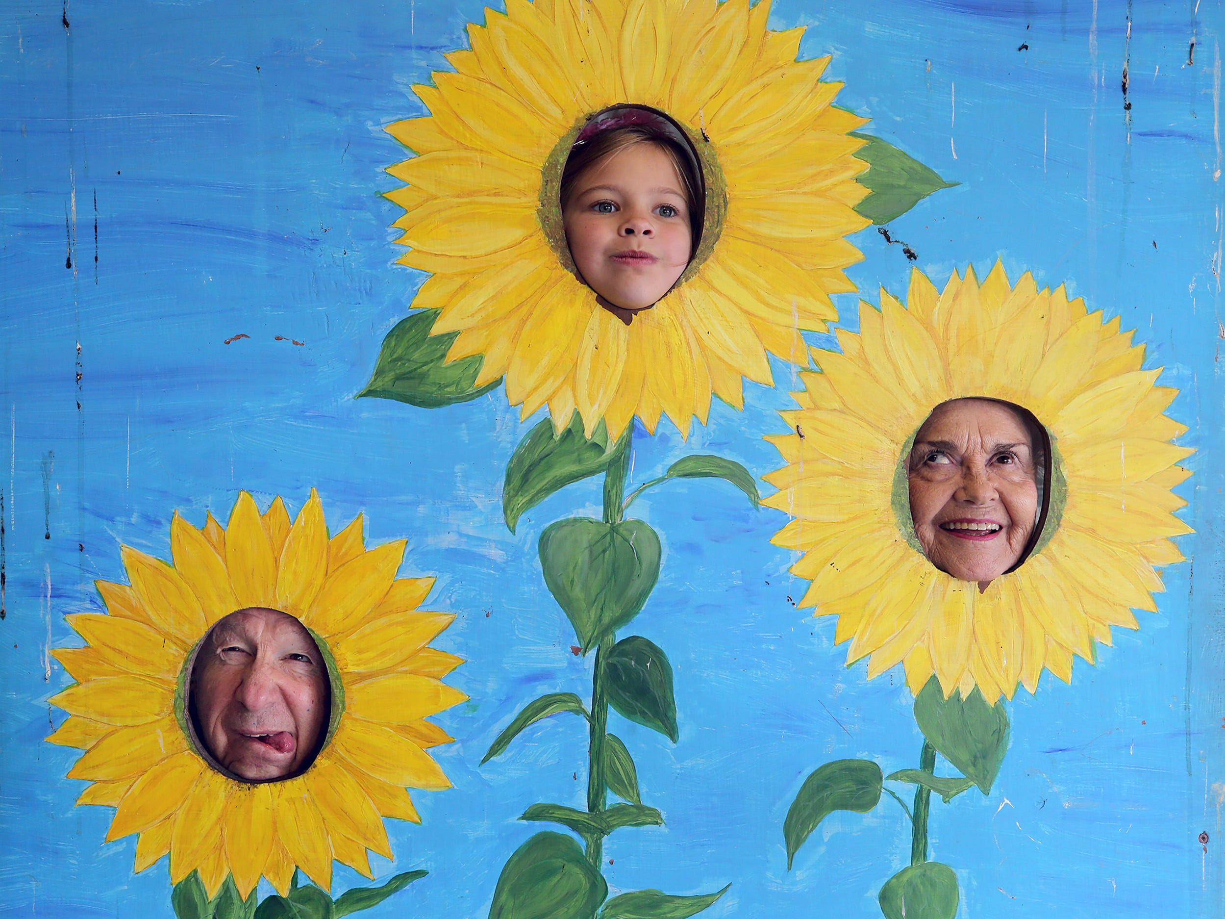 Glenn Hostetter, left, of Bremerton, his granddaughter Lucy Hostetter, top center, from Seattle, and wife Carol make funny faces as they get their picture taken as sunflowers after touring the the corn maze at Pheasant Fields Farms in Silverdale on Monday, October 29, 2018. The maze is open daily from 10 a.m. until 6 p.m. until November 1.