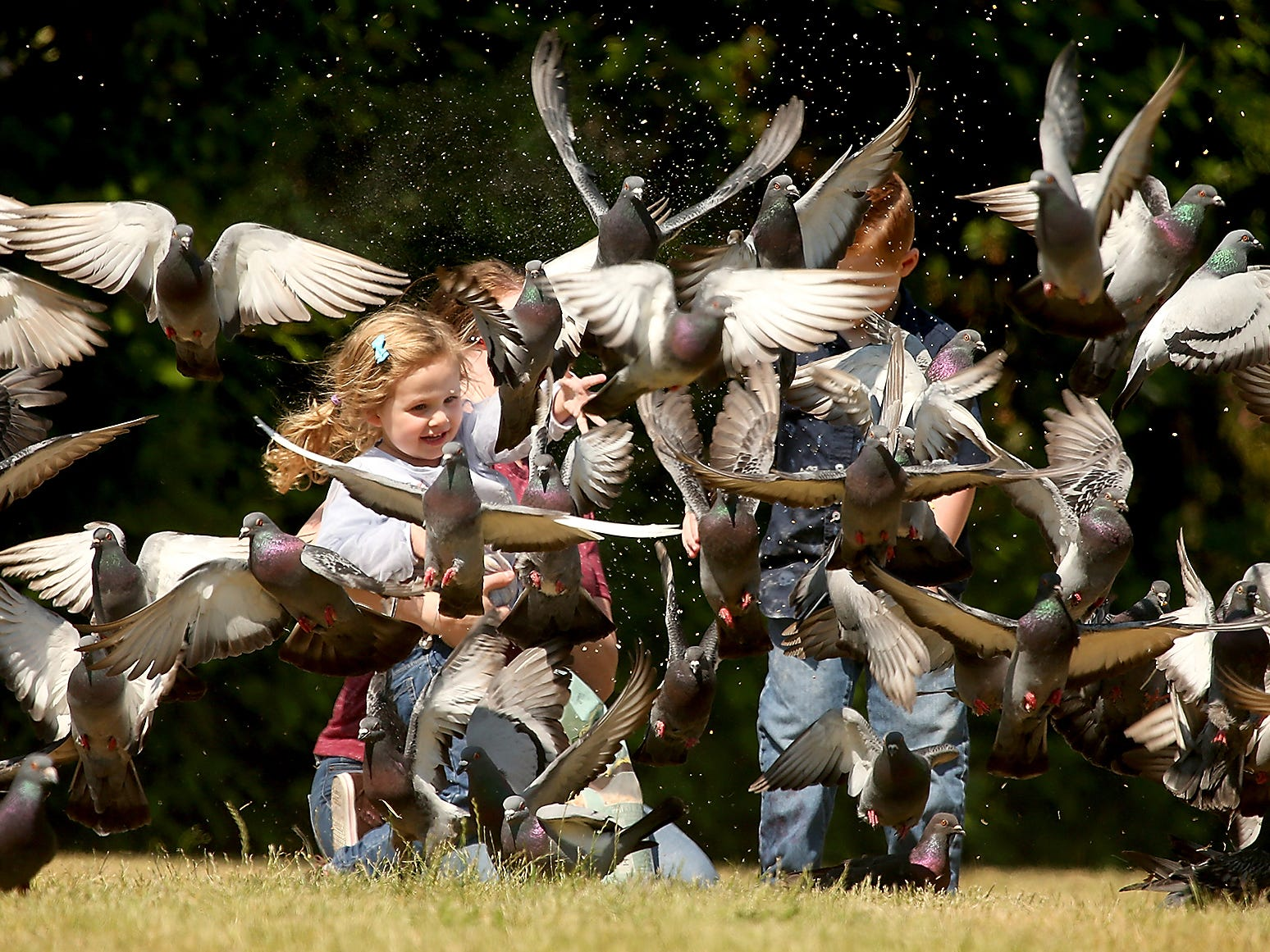 A flock of pigeons takes flight as Sue Lewis and kids Riley (left), 3, and Rowan, 5, toss them some bird seed at Old Mill Park in Silverdale, Washington on Tuesday, June 5, 2018.
