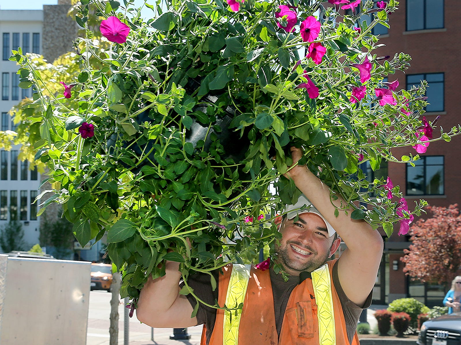 Bremerton Parks and Recreation worker Mike Volpe carries a petunia flower basket to be put up at sixth street and Pacific Ave. in Bremerton oN Wednesday.