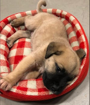 Indianapolis firefighters are asking for help as they figure out how this puppy ended up on the interstate.
