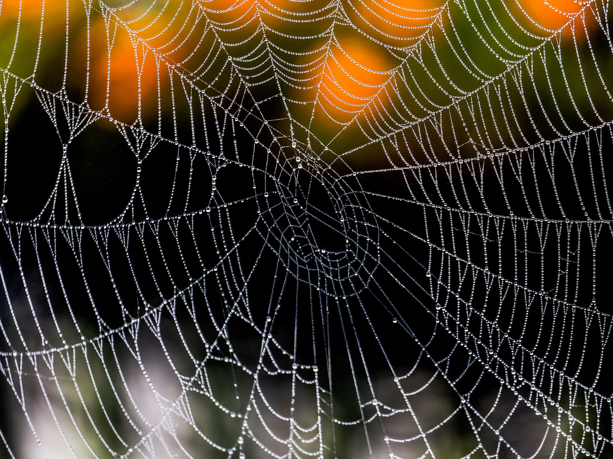 Dew drops cling to a spiderweb in the early morning.
