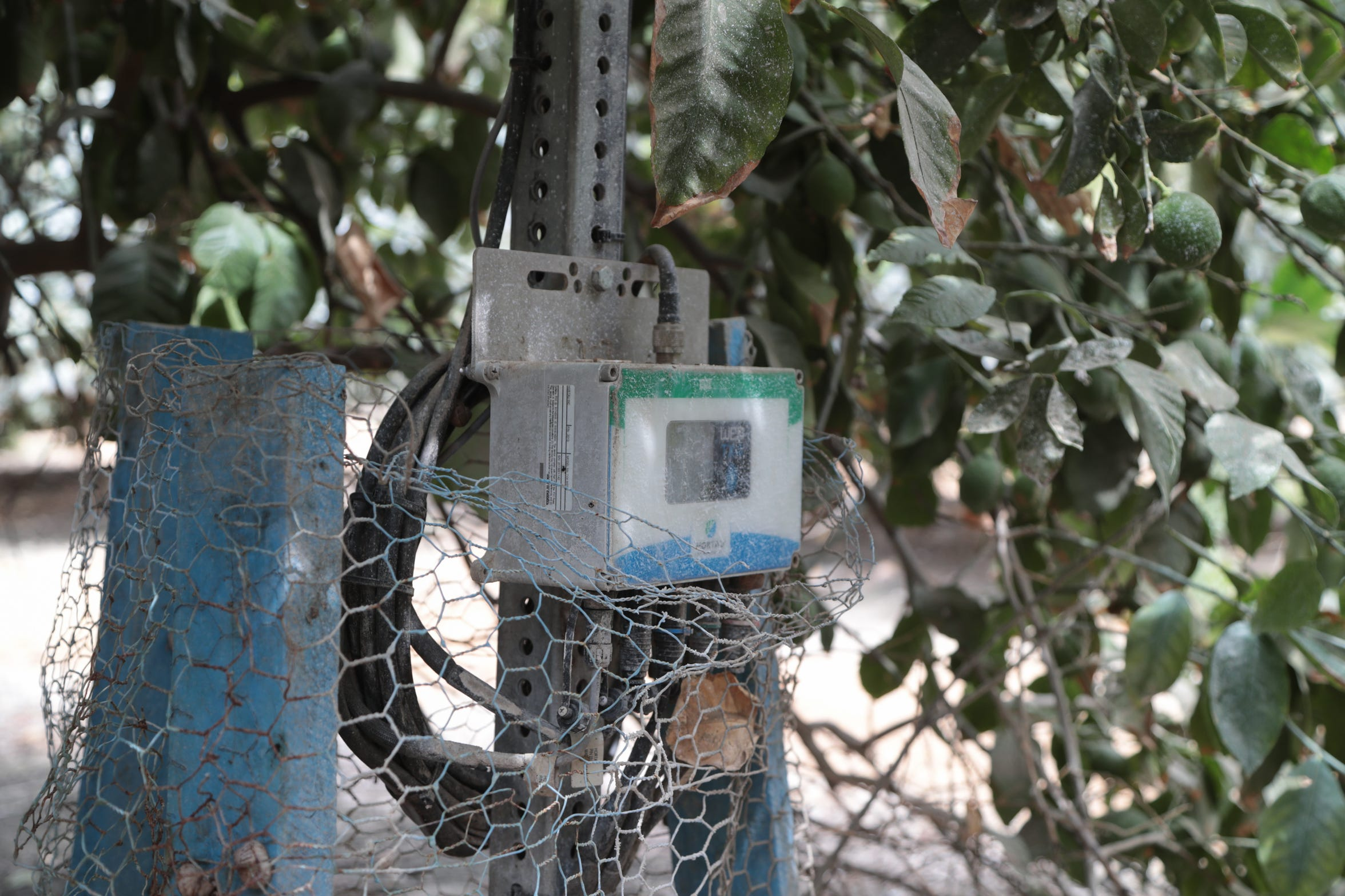 Workers at Seley Ranches use systems that monitor heat, wind and soil moisture to calculate the amount of water the citrus trees need and avoid water waste.