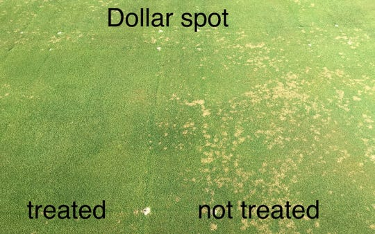 Dollar spot is the biggest disease problem on Wisconsin golf courses. Fungicide spraying is expensive but effective. A dollar-spot  app, based on analyses at UW-Madison's department of plant pathology advises golf-course superintendents when to spray, allowing control while minimizing pesticide runoff.
