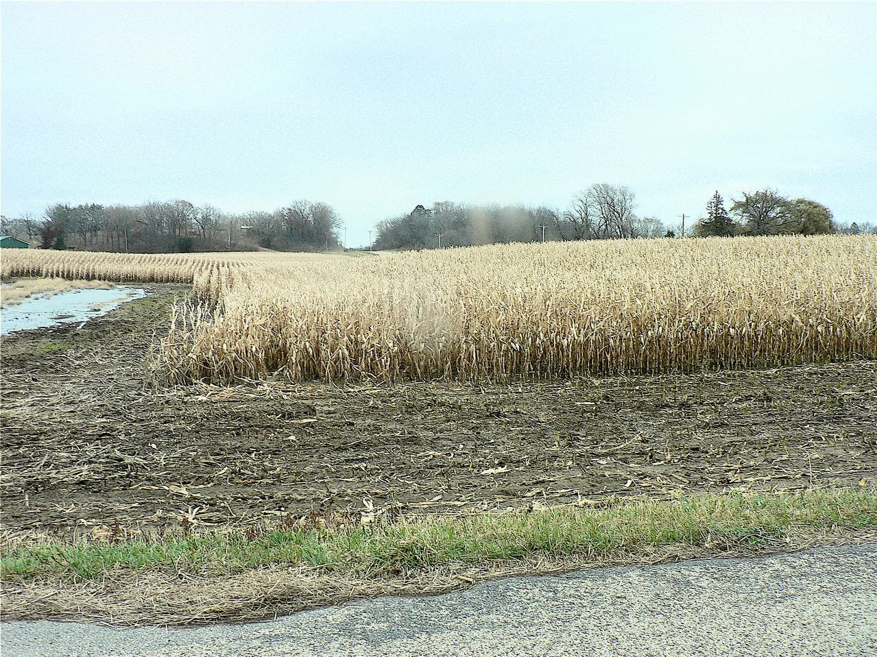 Some corn was still standing in mid-December but a couple of good harvest weeks followed.