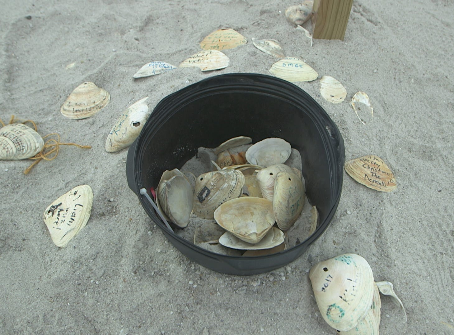 Clams act as ornaments for the Normandy Beach Christmas tree