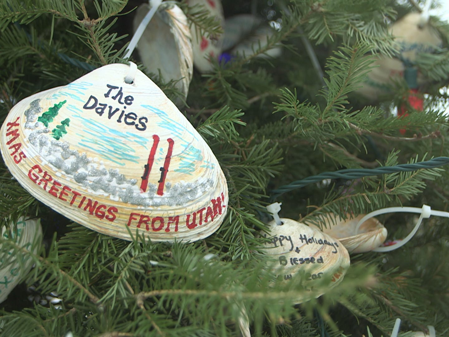 Locals use clam shells as ornaments to decorate the Normandy Beach Christmas tree