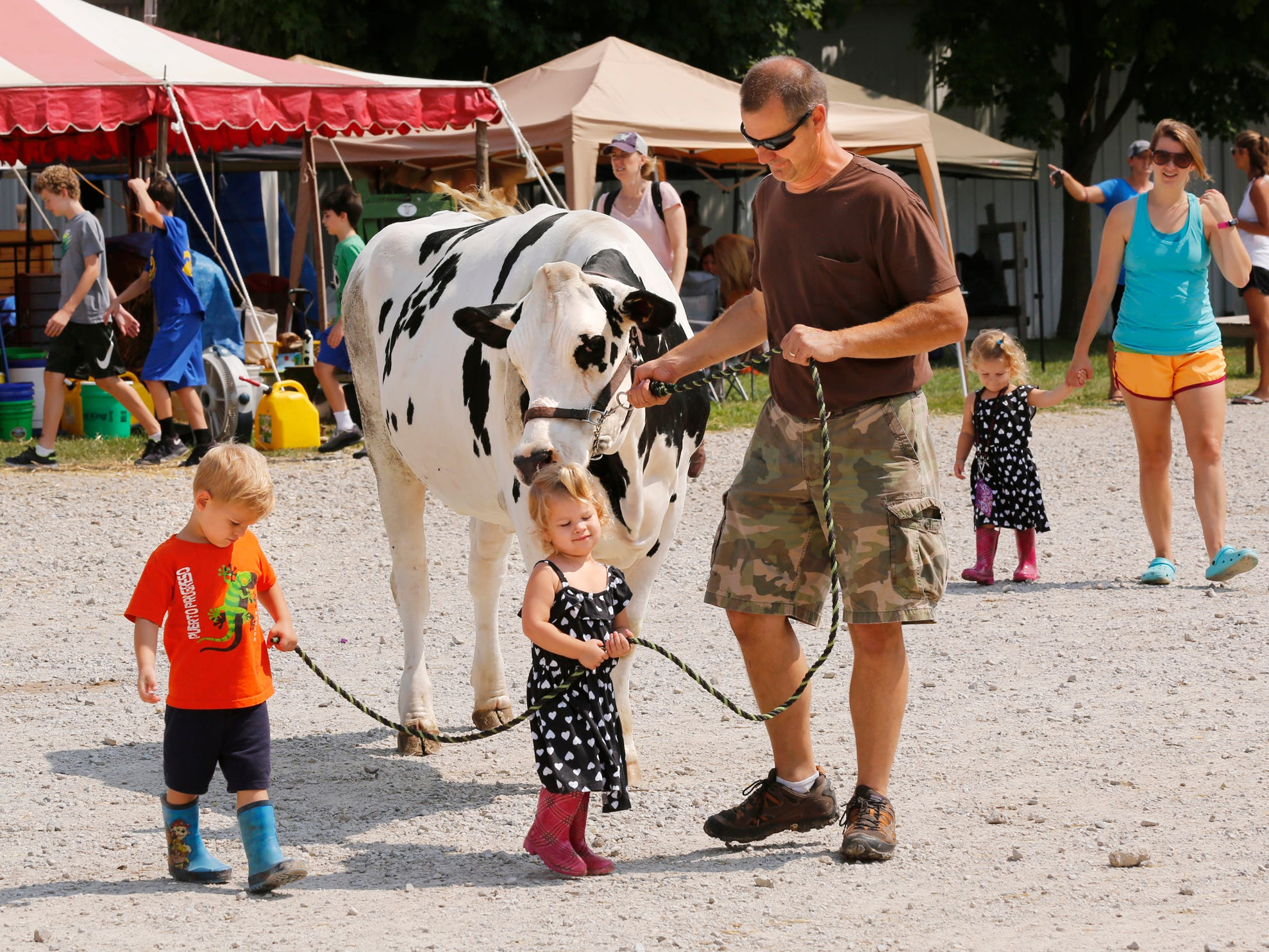 Dennis Barker is assisted by his grandchildren Elyja Wright, 3, and Hadley Wright, 2, as he walks a Holstein heifer at the Tippecanoe County 4-H Fair Tuesday, July 24, 2018, in Lafayette. The Holstein is being shown at the fair by Barker's daughter Grace