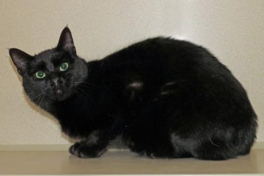 Kit is about 9 months old; she is very playful, affectionate, and loves to explore.