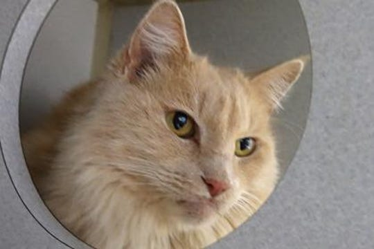 Walt is a 6-year-old neutered male, who weighs about 10 pounds.