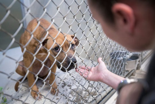 Saving With Soul Pet Rescue volunteer Christie Woodbury spends time Monday with a dog while looking for animals to rescue at the Santa Rosa County Animal Shelter in Milton. The rescue group marked its 1,000th rescue of the year in 2018.