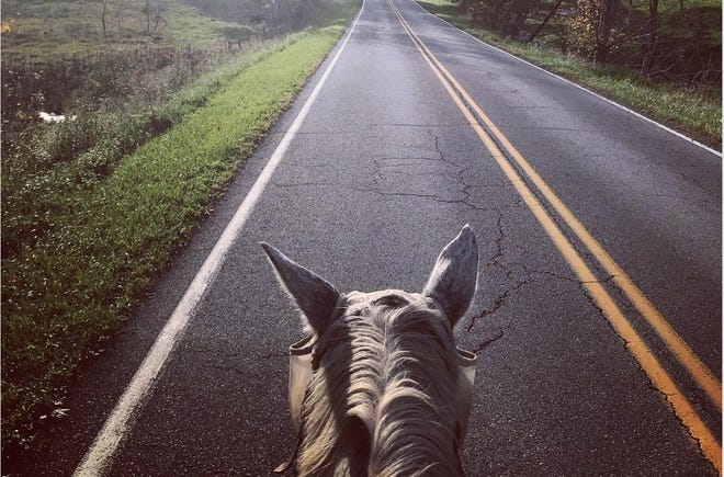 Sarah Murphy and her horse, Rob Roy, set out to protest the Atlantic Coast Pipeline in September. With the first half of the trip over, they hope to make it home in time for Christmas.