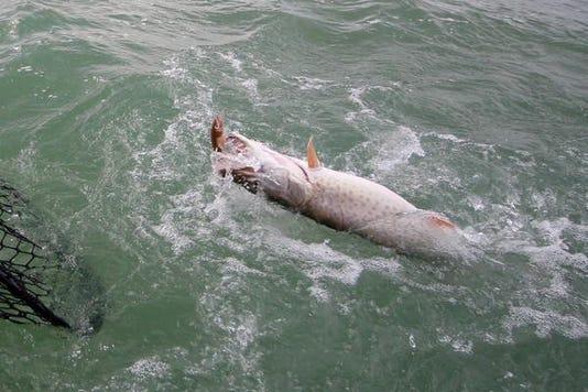 Fishings 1225