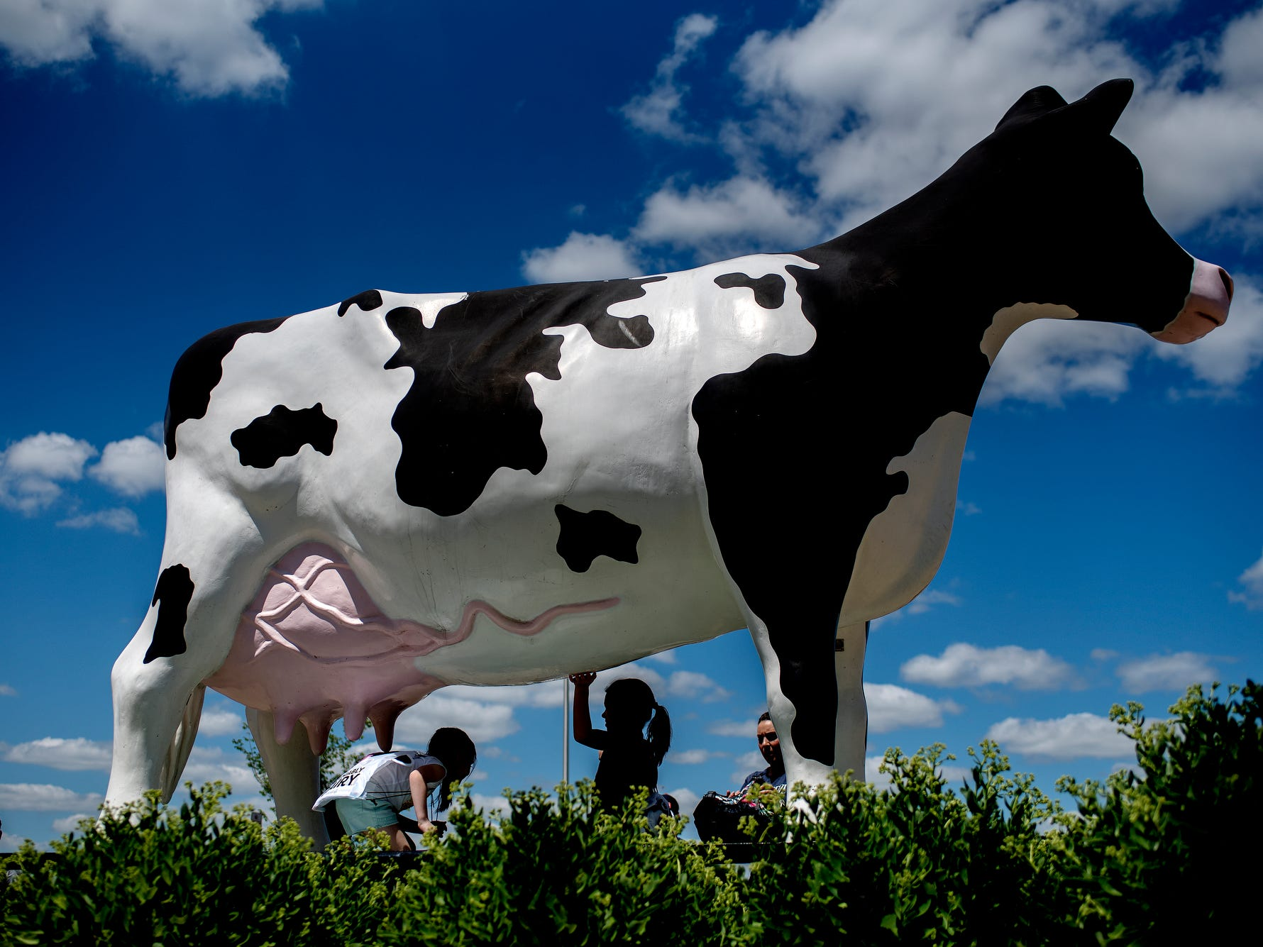 Children and adults gather around a large dairy cow statue outside during the Great Dairy Adventure on Wednesday, July 18, 2018, at the Michigan State University Pavilion for Agriculture and Livestock in East Lansing. The family-friendly event featured various dairy-themed activities including cow milking, calf petting, educational stations highlighting the process of dairy farming and more. The great dairy adventure was held as part of the Michigan Dairy Expo which runs July 16-20.