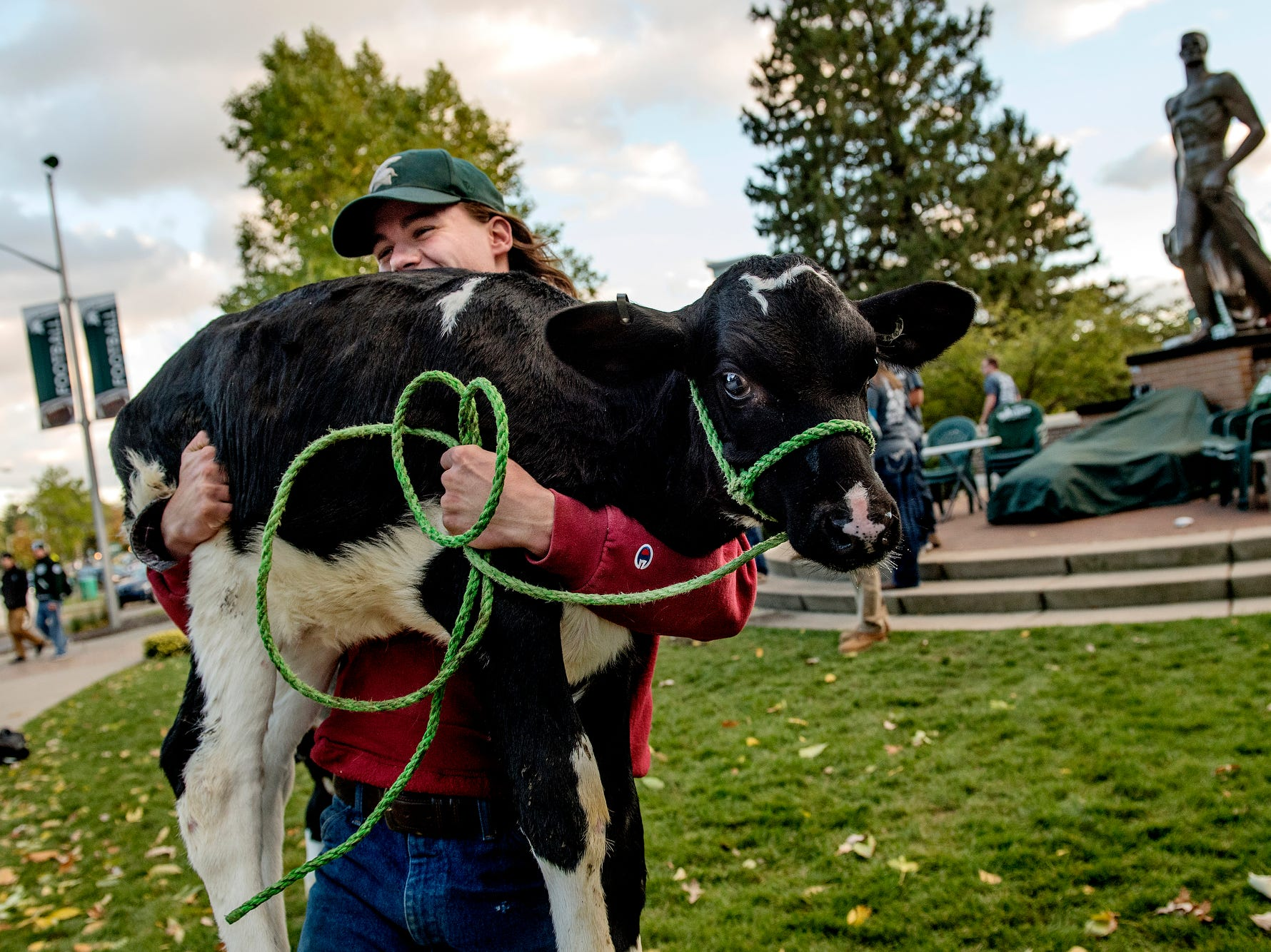 Michigan State University student Joe Heaman carries a calf back to a trailer after members of the MSU Dairy Club posed for a picture in front of the the Sparty statue on campus in East Lansing on Wednesday, Oct. 17, 2018, during Sparty Watch. Dairy Club president Jared Sanders said that every year members, along with two calves, gather at the landmark for a group photo during rivalry week. Sparty Watch, a tradition where Spartan Marching Band members guard the Sparty statue, takes place the week leading up to the MSU vs. Michigan football game.
