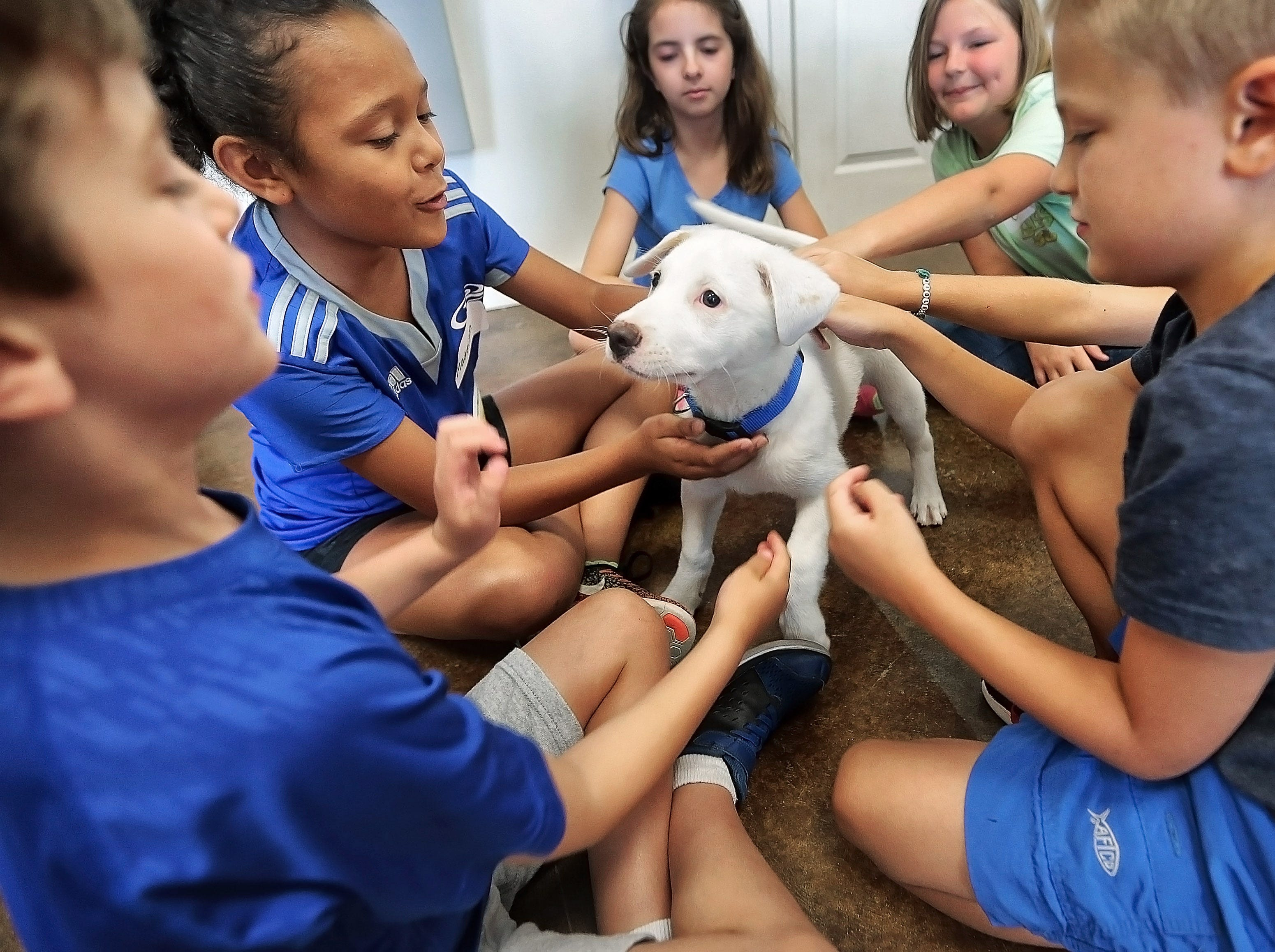 Day campers get some hands-on time with a puppy named Jazzy during the one-day kid's camp at the pet adoption center in Carriage Crossing hosted by Collierville Animal Services. Participants at the annual camp learn about owning pets, make animal crafts and get to play with puppies and kittens.