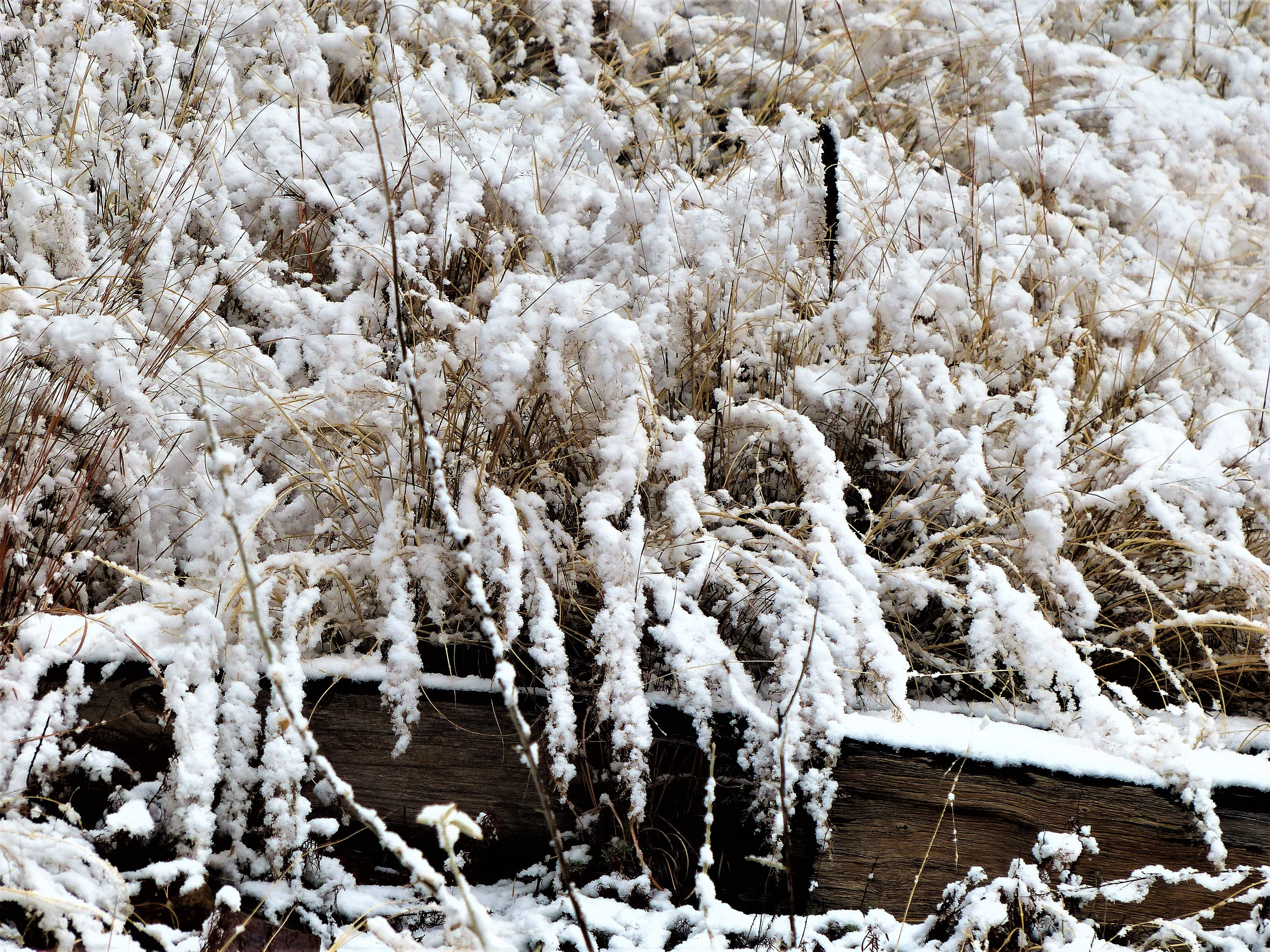 Tall grass from the Fall created droops from the weight of winter snow.