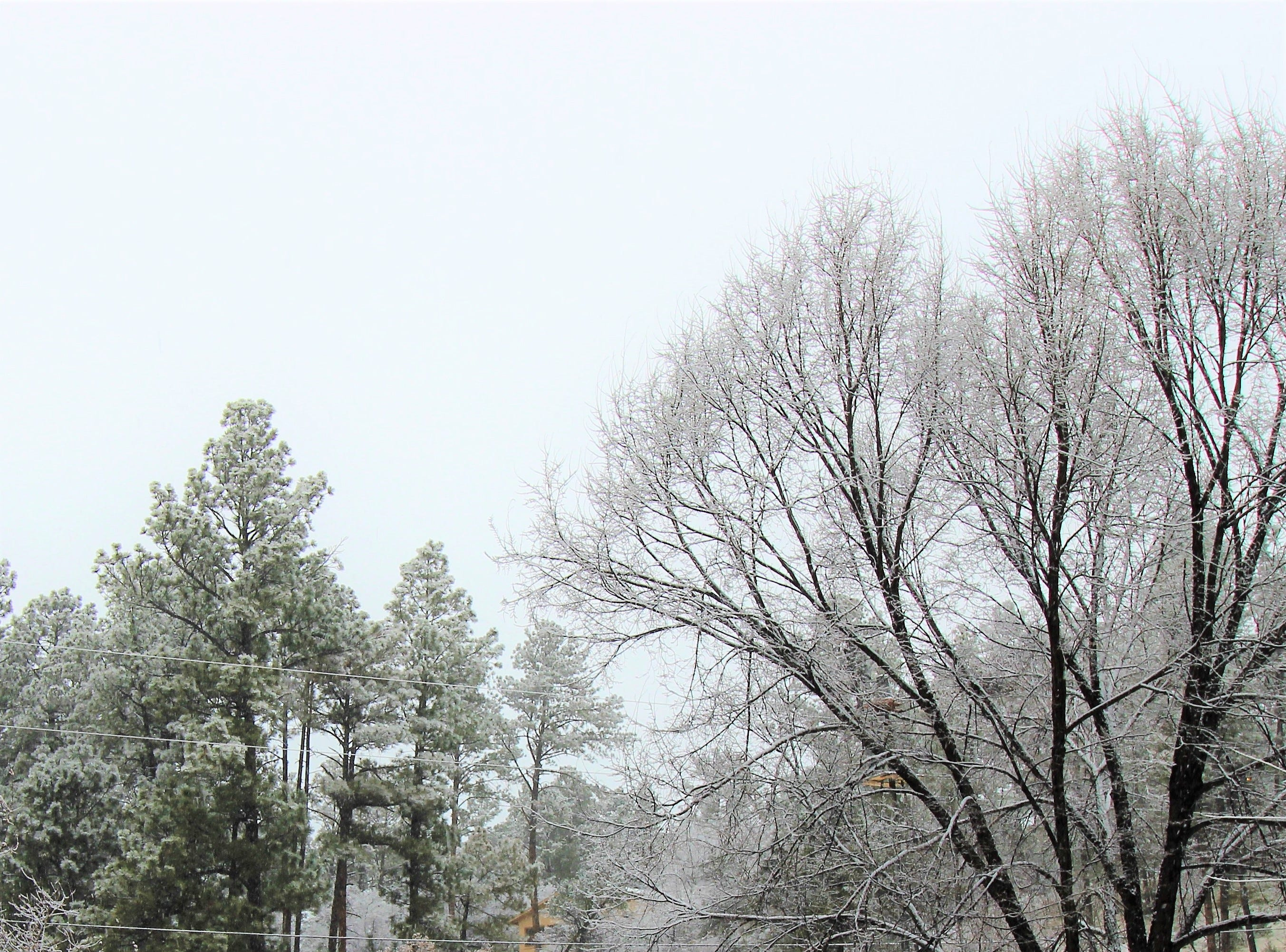 An old-fashion winter wonderland took shape as the snowfall early wed. morning delivered a fresh white blanket to the Village.