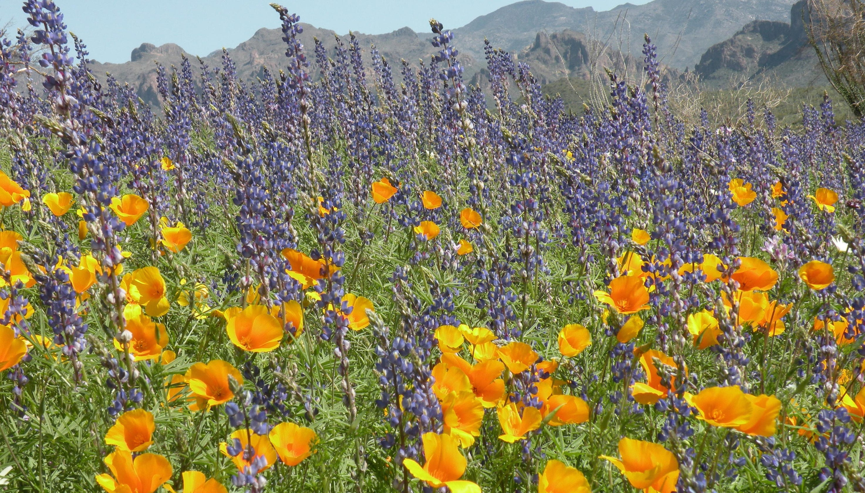 Where To See The Best Desert Wildflowers In Phoenix