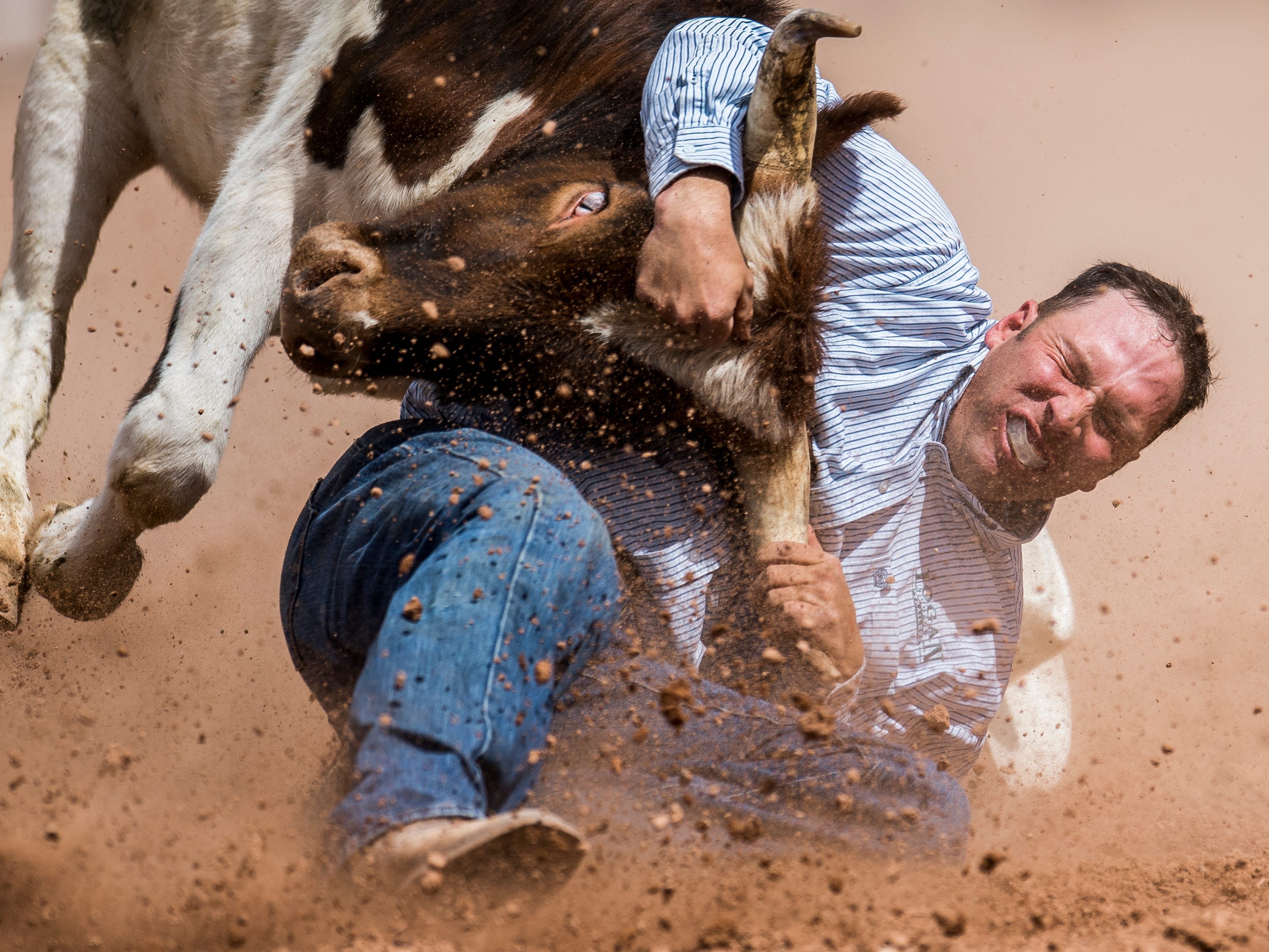 A cowboy struggles to bring down a steer during the PRCA rodeo at the Iron County Fair in Parowan on Sept. 3, 2018.