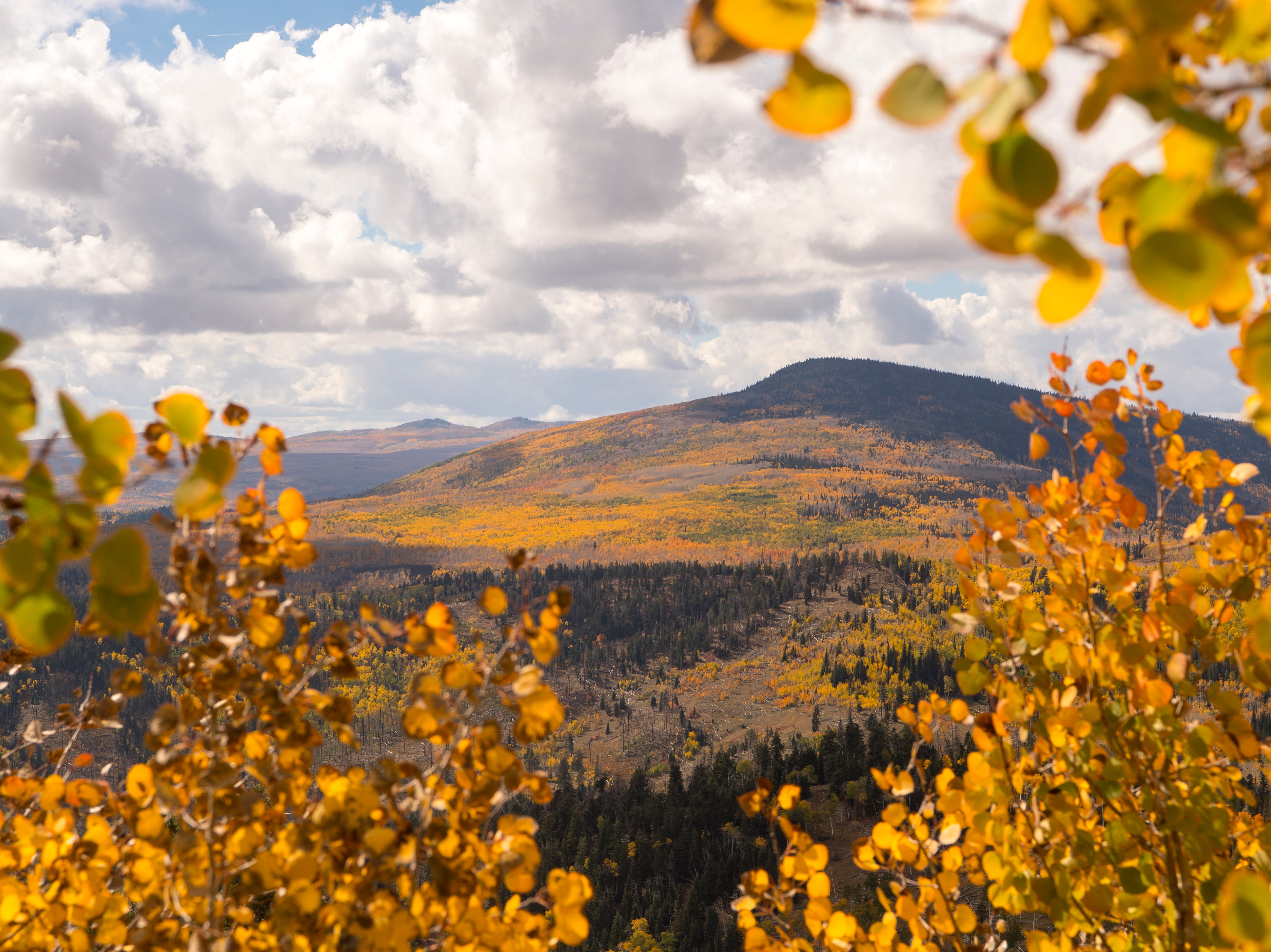 Fall foliage covers the landscape in Dixie National Forest Monday, October 1, 2018. The Aspen trees at the highest altitudes have already dropped their leaves, and high winds will continue the process through this week.