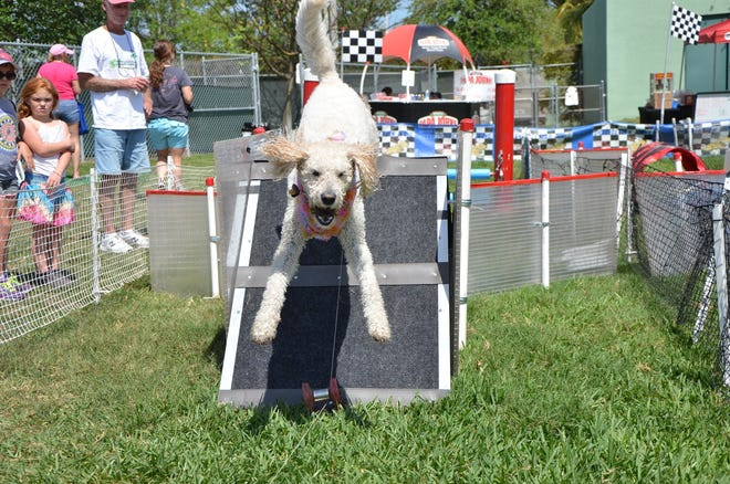 Dogs of all sizes and breeds have fun running in the Doggie Fun Zone.
