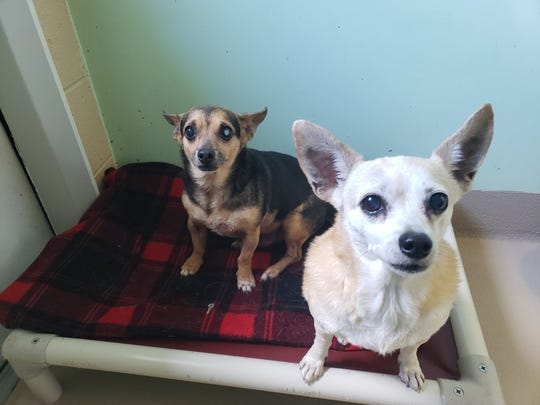Coco and Dobie need a home together
