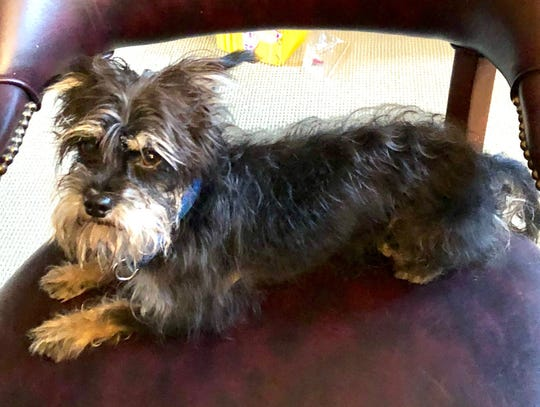 Elvis, a 6-pound rescue, was attacked and killed by a pit bull on Sunday.