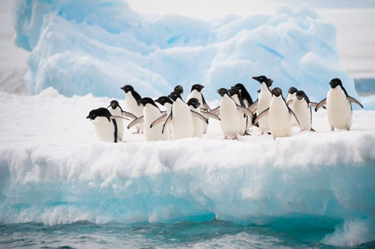 Though one of the most remote places on earth, Antarctica is on the front lines of the effects of climate change. Ice is melting at an alarming rate, and overfishing of krill threatens the region's entire food chain.