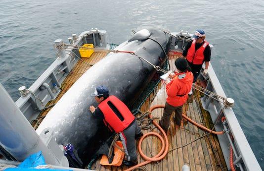 Japan Whaling -- AP