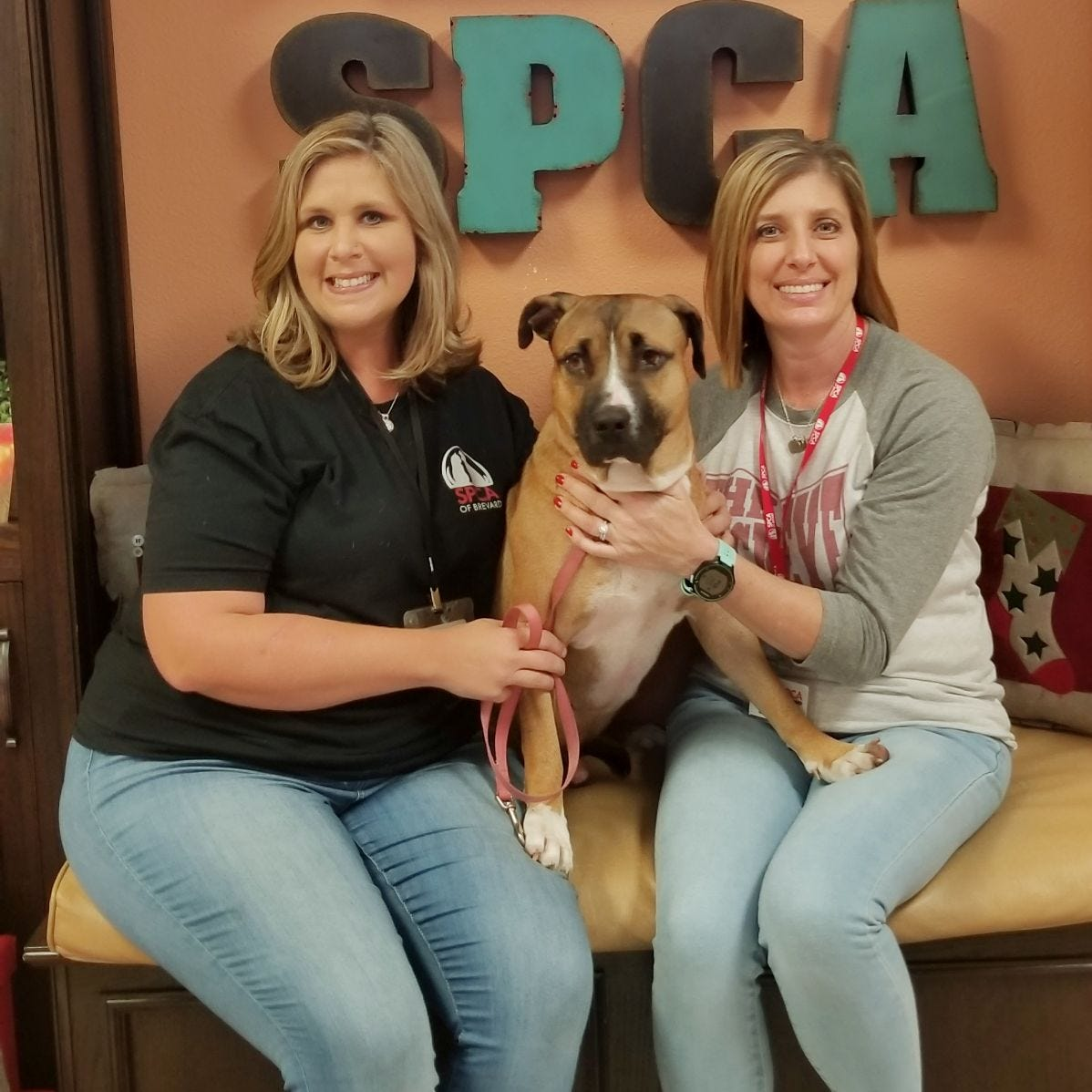 SPCA of Brevard: On a mission to save animals as it nears its 40th anniversary