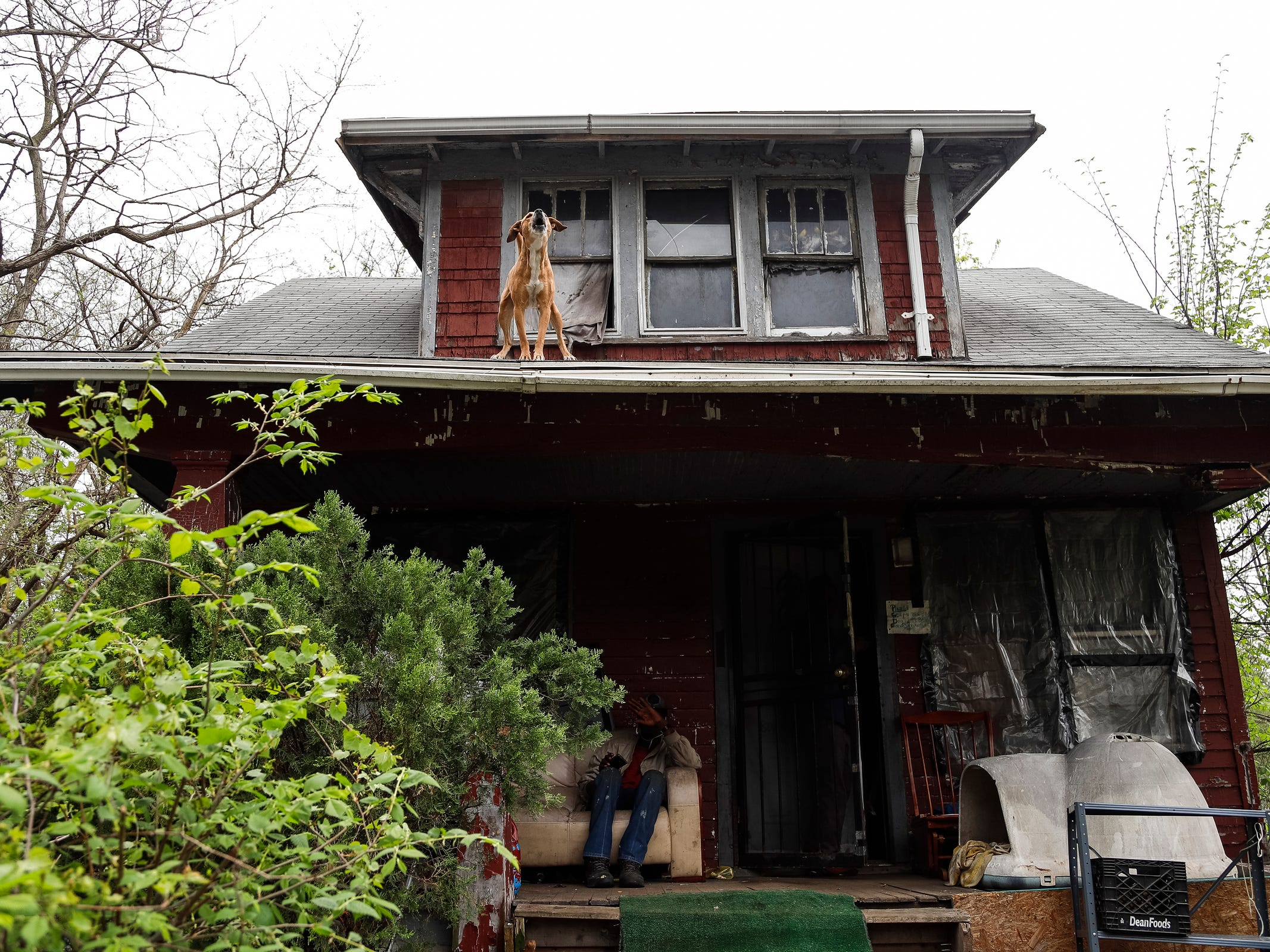 Sugar, a dog that belongs to an occupant of a land bank house in the 11400 block of Mendota, stands on a roof after jumping out of the second floor window on May 10, 2018.