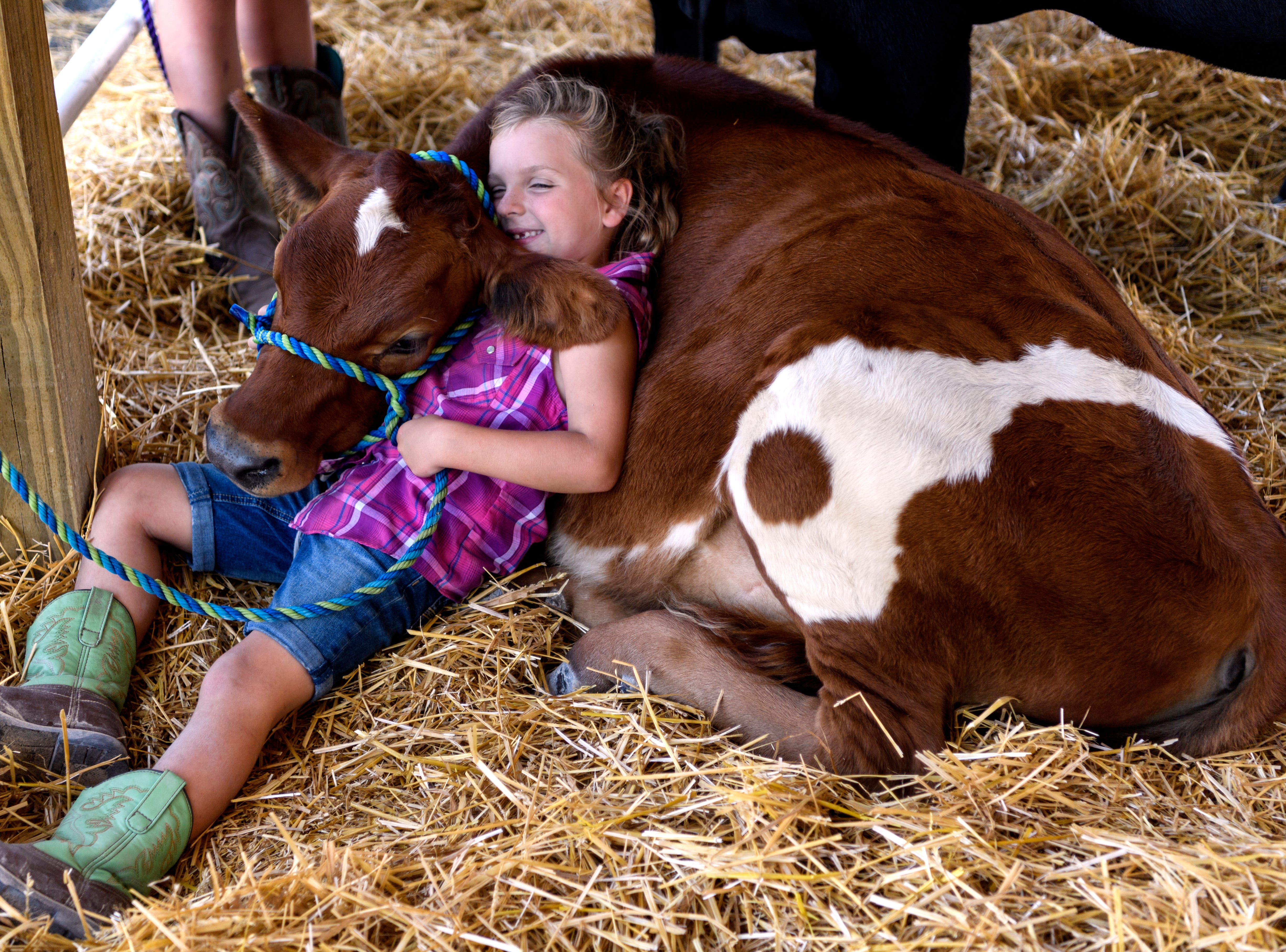"Paige Bennett, 7, of Robards, Ky., takes a moment to snuggle with her bottle-calf Rookie before preparing for the Cattle Show alongside her older sisters, Anna and Madelyn, not pictured, at the Henderson County Fairgrounds, Friday evening, July 20, 2018. ""She'll halter him up and walk him like a puppy dog,"" Paige's mother, Cassandra Bennett, said."