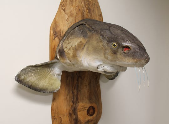 Sturgeon are the focus of the new exhibit, located at the Thelma Sadoff Center for the Arts.