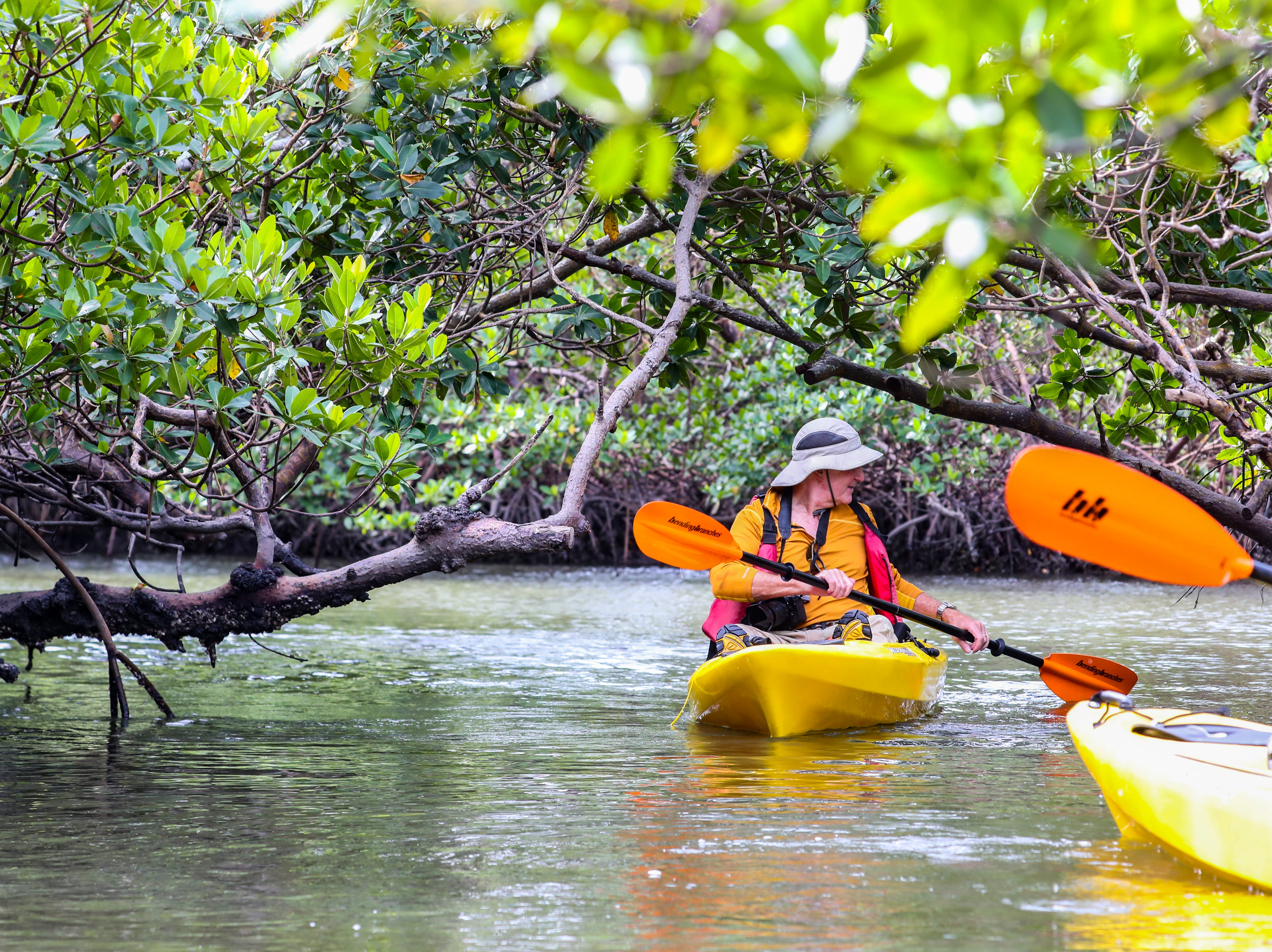 Martin Strasmore, of Naples and a friend of Rookery Bay, paddles through the mangrove canopy.  Rookery Bay National Estuarine Research Reserve in Naples offers a two-hour guided kayak tour of Rookery Bay. This tour provides an up-close and personal experience of this irreplaceable national treasure. Paddle through the shallows and maze like mangrove tunnels while learning about  surroundings from an experienced guide and naturalist. Randy McCormick, captain and guide, has worked at the Reserve for many years and knows the area intimately. He is a Certified Interpretive Guide, an instructor in the Florida Master Naturalist program and a fifth generation Floridian.