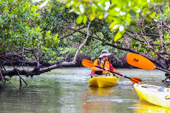 File: Martin Strasmore, of Naples and a friend of Rookery Bay, paddles through the mangrove canopy.