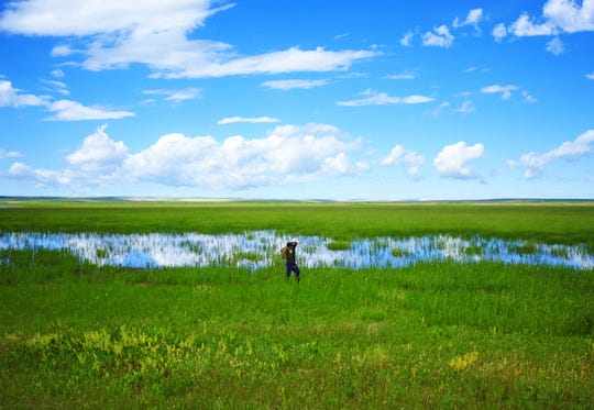 Montana Fish Wildlife and Parks game warden Trenten Farmer combs a marshy area for grizzly bear prints last summer at Benton Lake National Wildlife Refuge.