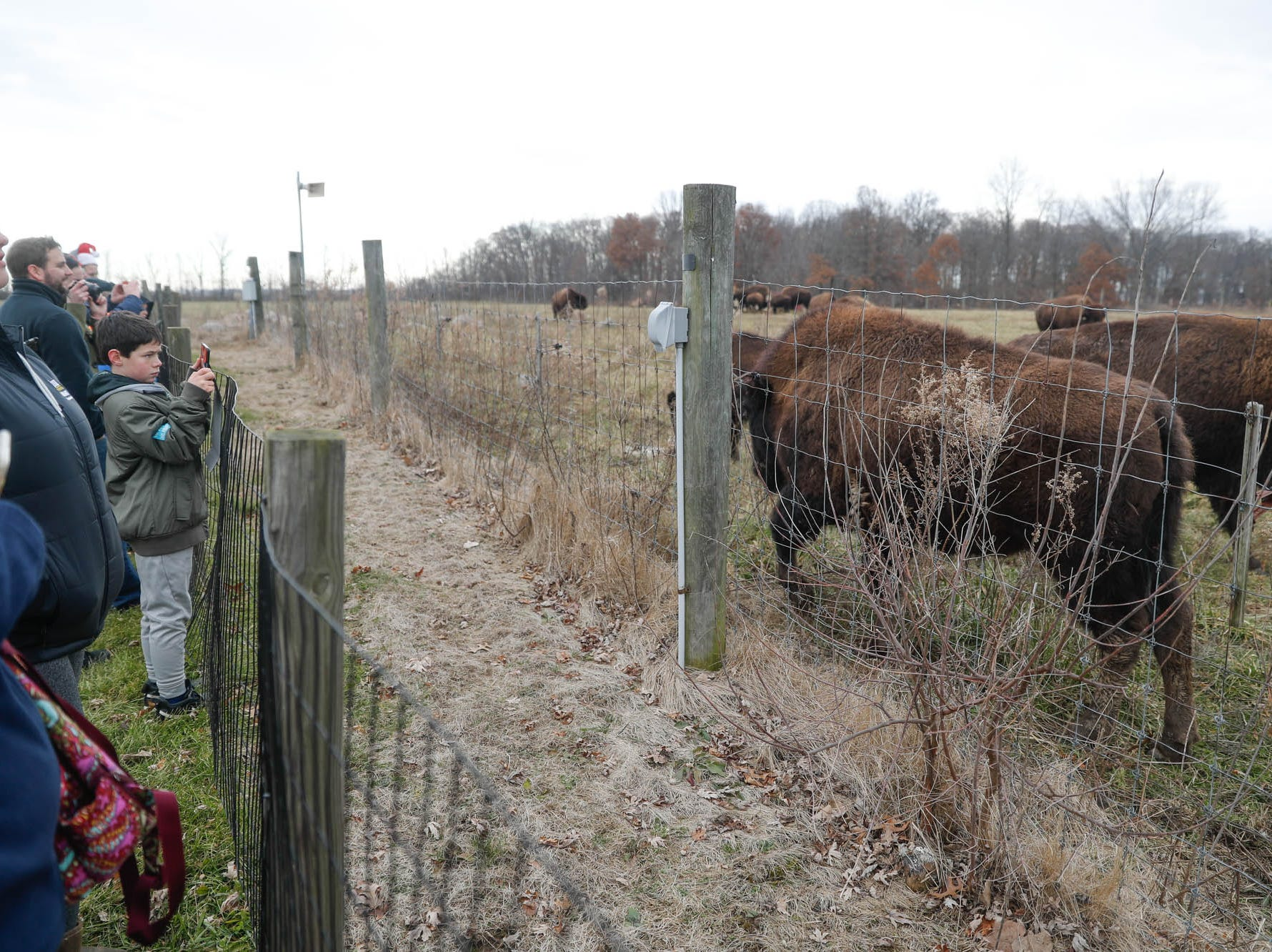 Guests visit with bison during a holiday tour of Wolf Park in Battle Ground Indiana on Saturday, Dec. 15, 2018.