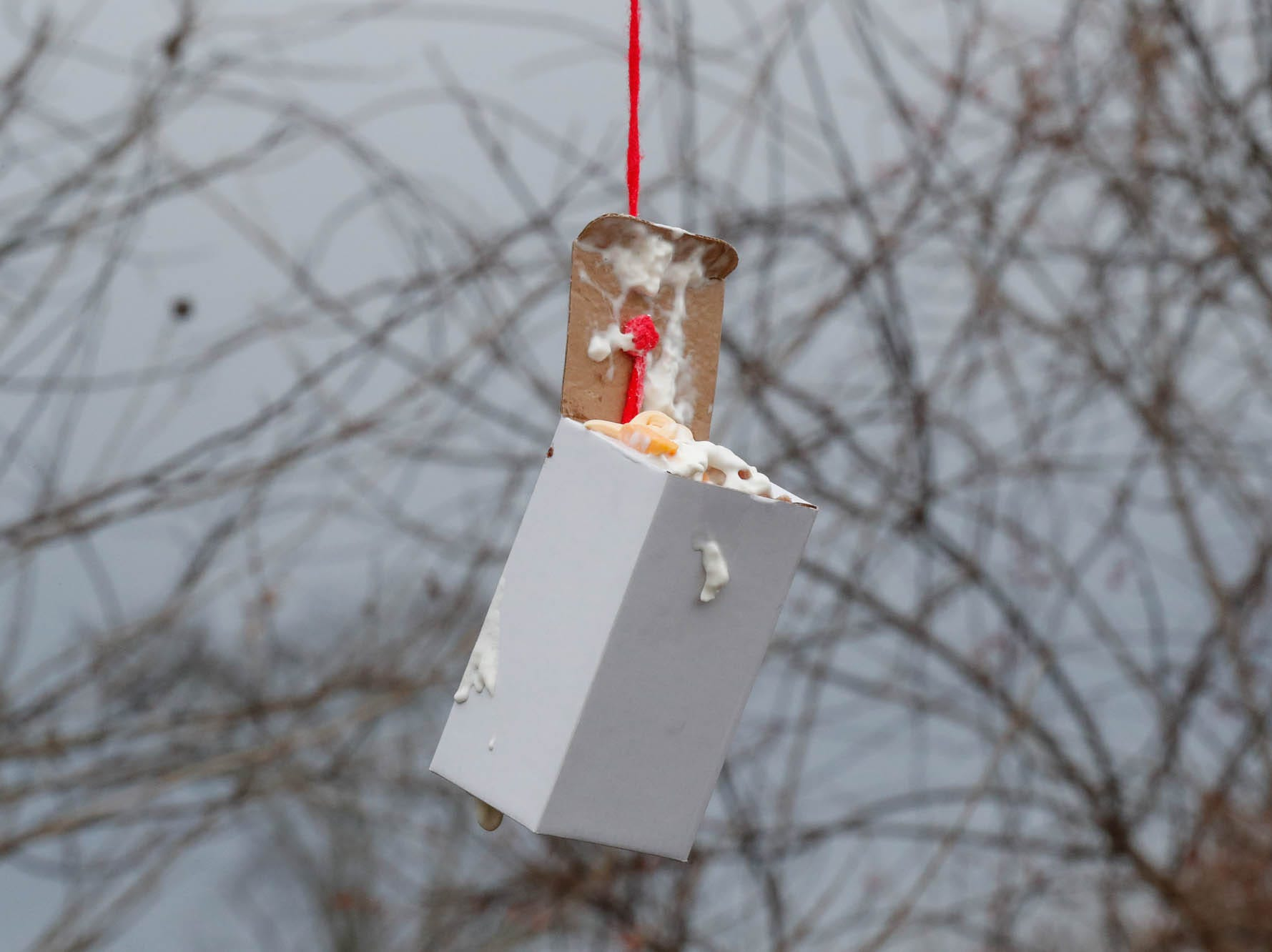 Tasty treats are hung on trees and placed throughout the wolf enclosure at Wolf Park during Santa's annual visit in Battle Ground Indiana on Saturday, Dec. 15, 2018.