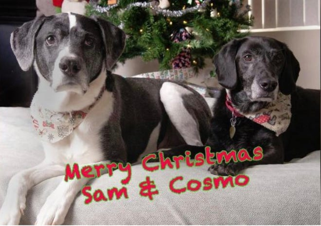 Sam and Cosmo are two dogs who escaped a request by their prior owner to euthanize them.