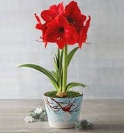 Monitoring the right amount of light and water is key to healthy blooms.