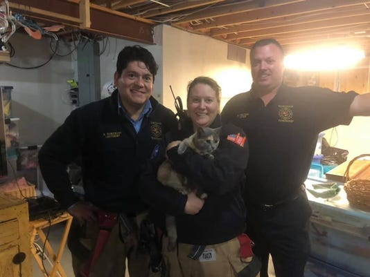 Firefighters And Cat