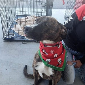 Pitre auto dealerships in Las Cruces welcome Animal Services Center of Mesilla Valley at their locations on two Saturdays a month and pay the adoption fees.