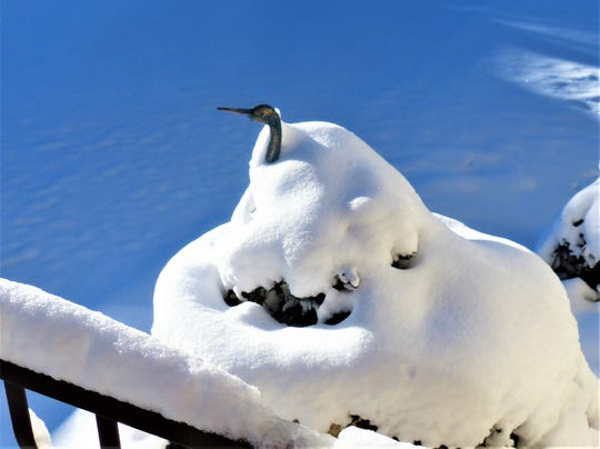 A yard ornament crane sticks it head out of the snow.