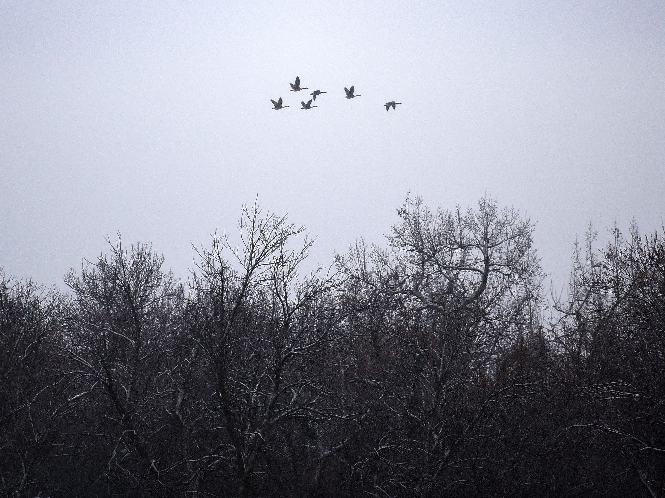 Geese fly through the snow over Sertoma Park Thursday, Dec. 27, in Sioux Falls. More snow is expected to arrive in South Dakota on Thursday and Friday as a winter storm moves through the area.