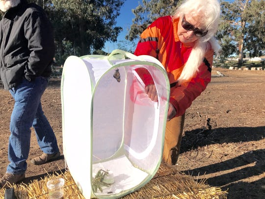 Nancy Cozza, president of the Huenemean Bohemian Artist Melting Pot Ministry, gets ready to release a monarch butterfly she raised at home.